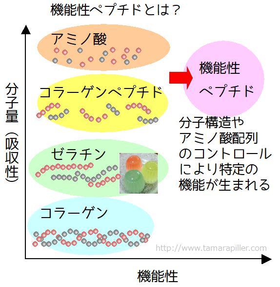 機能性コラーゲンペプチド